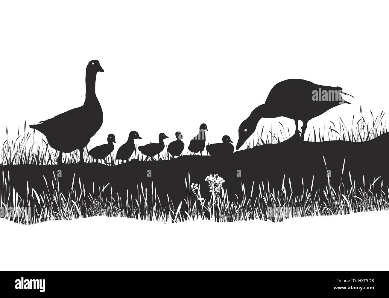 Geese family on spring meadow - Stock Vector