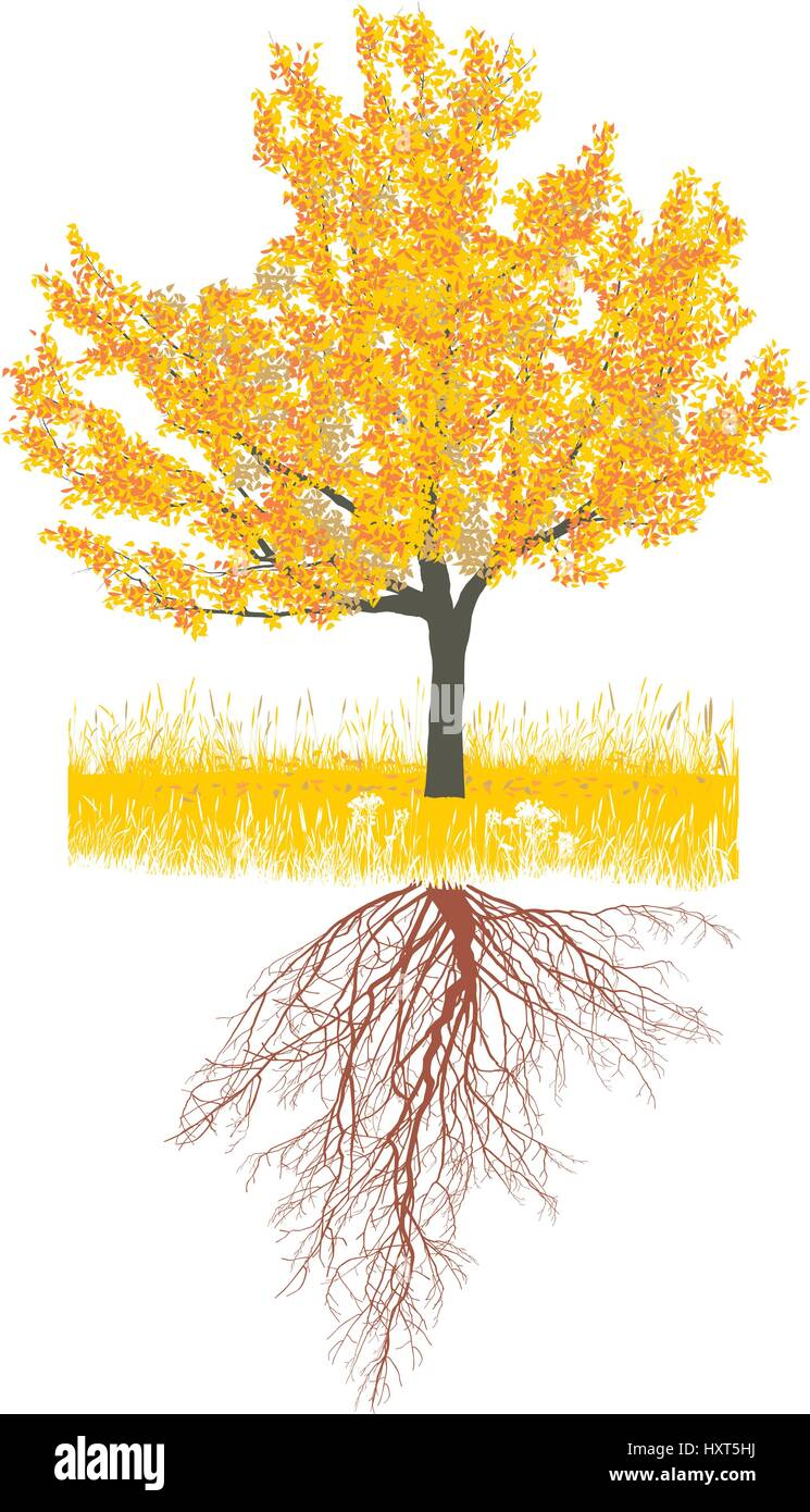 Cherry tree in autumn with roots - Stock Vector