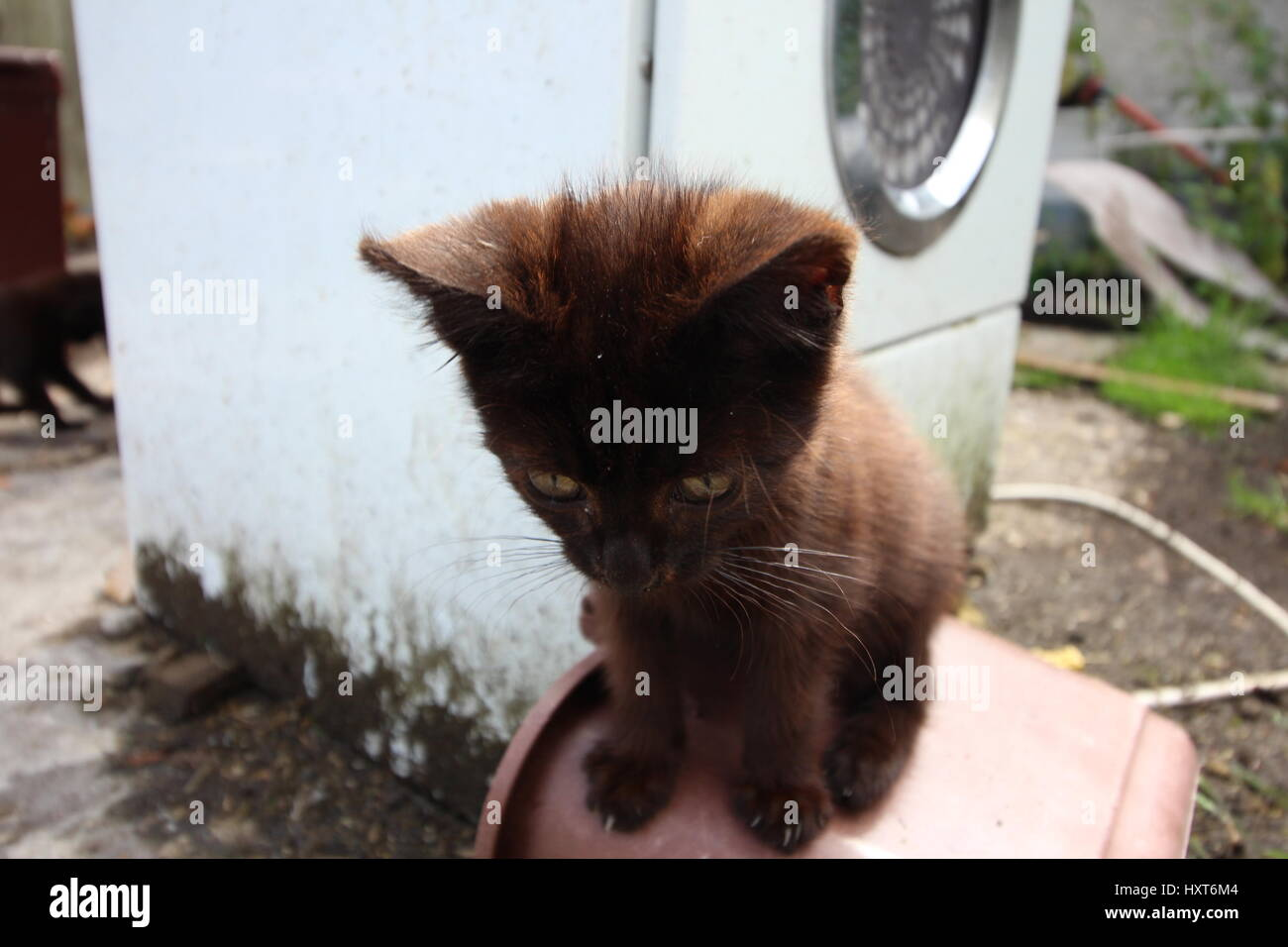 Black kitten playing outside in the sun. - Stock Image