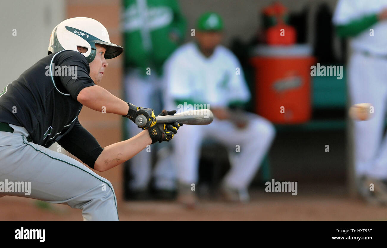Albuquerque, NM, USA. 29th Mar, 2017. Hope's #1 Ty Fickel prepares to bunt the ball in their game against Albuquerque Stock Photo
