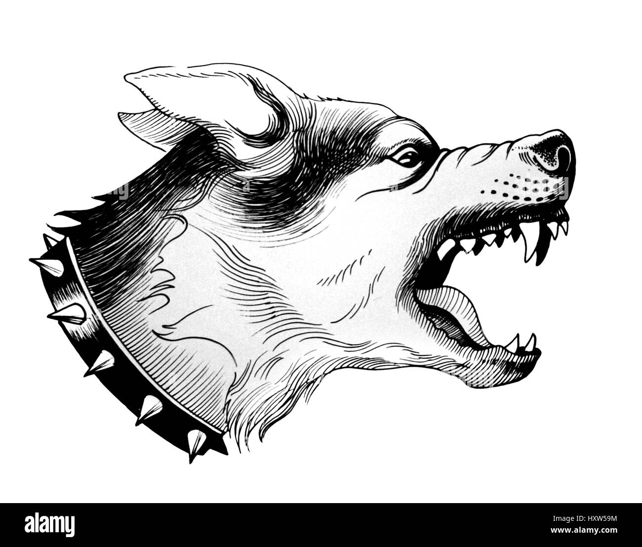 Aggressive Dog Black And White Stock Photos Images Alamy Mad Wiring Diagram Angry Image