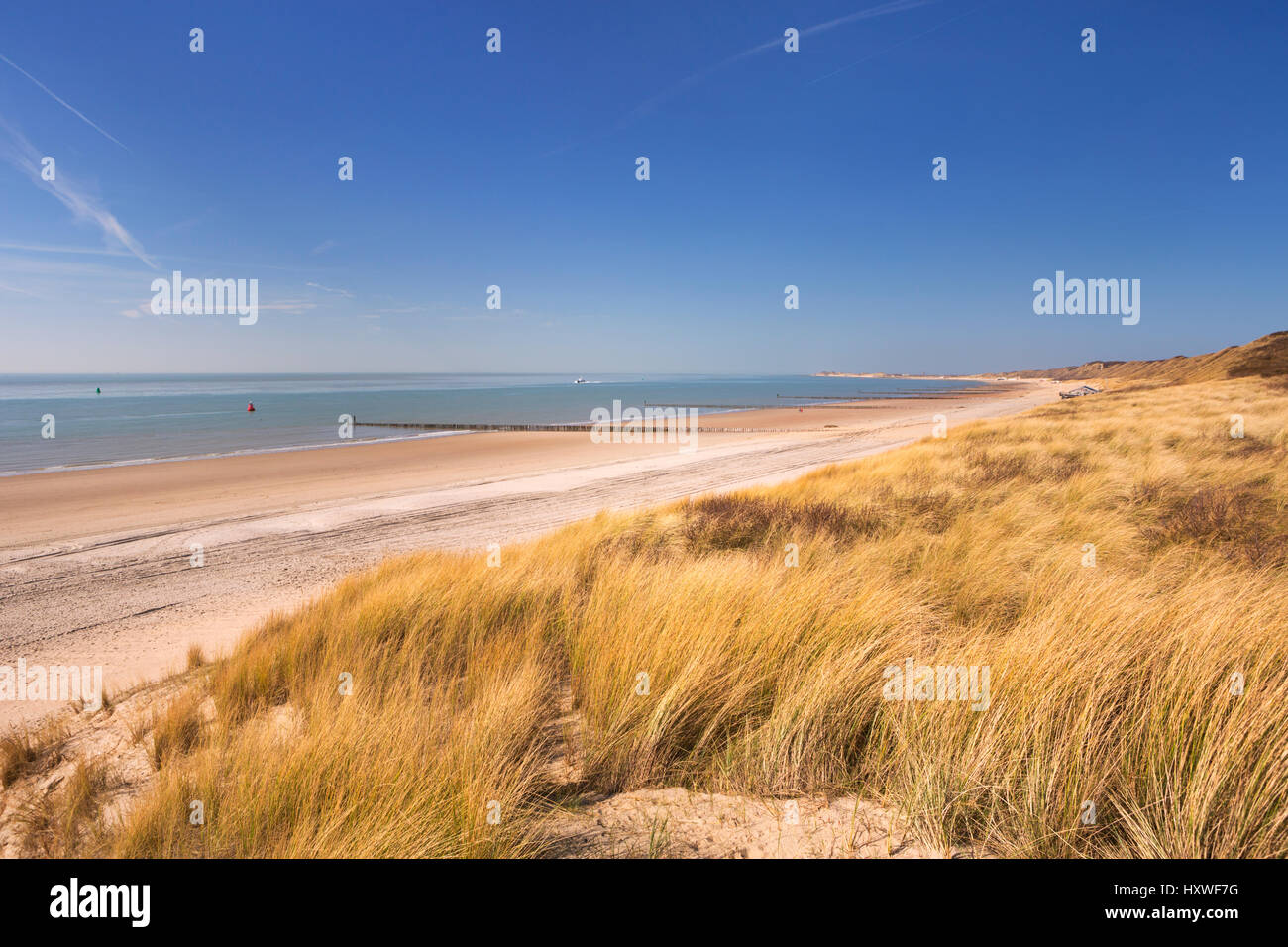 Dunes on the coast of Dishoek in Zeeland, The Netherlands. - Stock Image