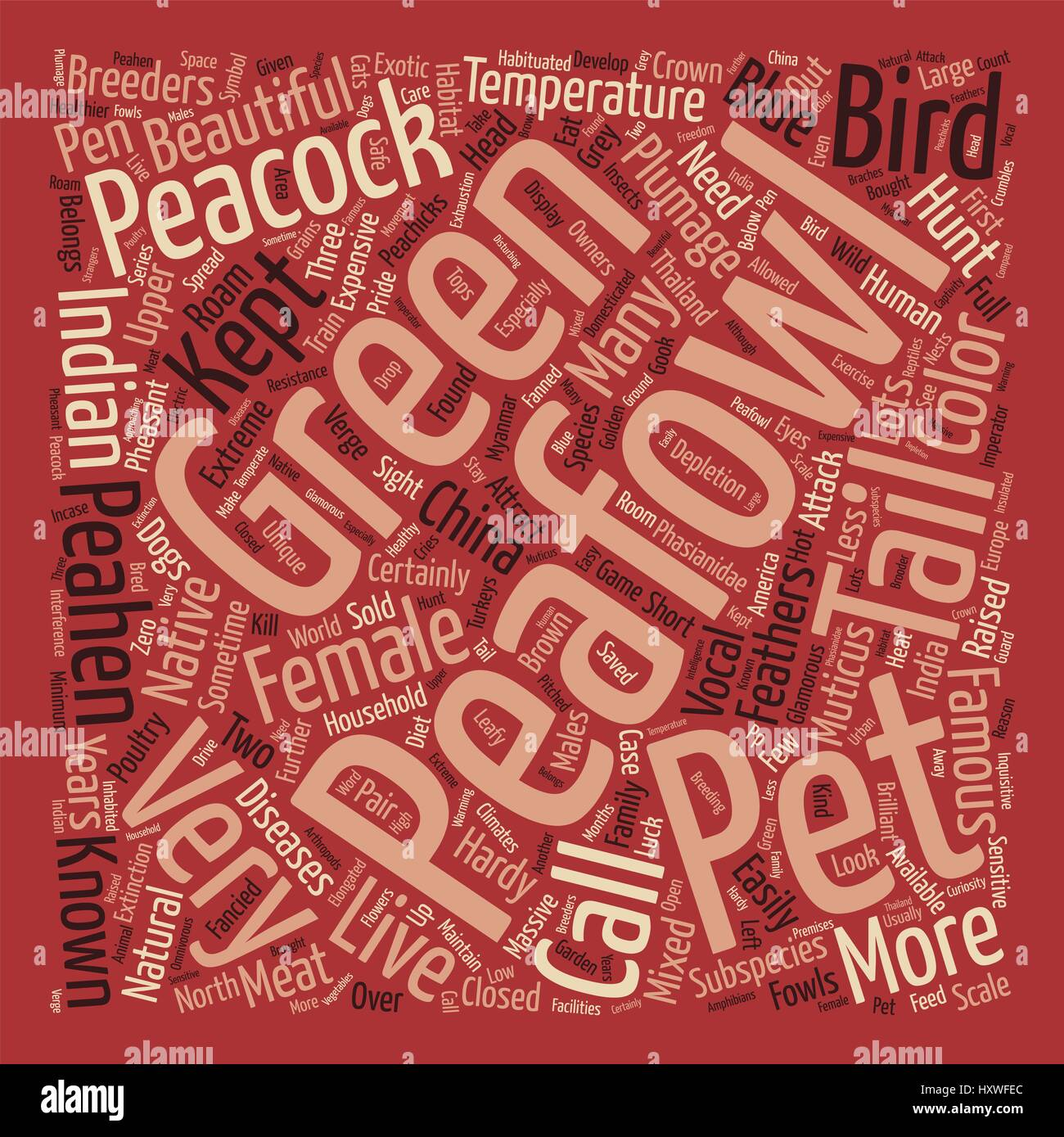 Peafowl text background word cloud concept - Stock Vector