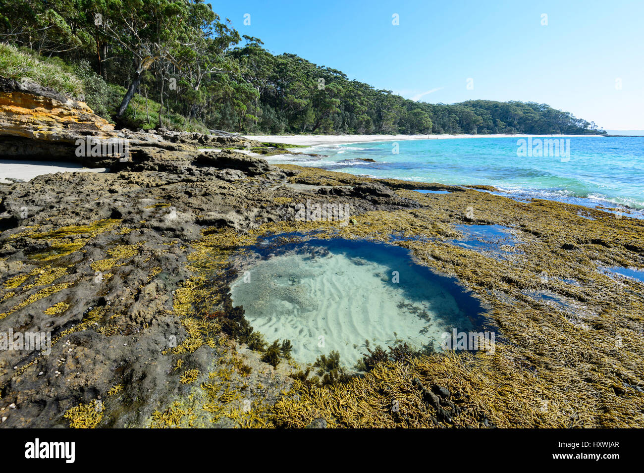 Circular rock pool and seaweeds at Murray's Beach, Booderee National Park, Jervis Bay,  New South Wales, NSW, - Stock Image