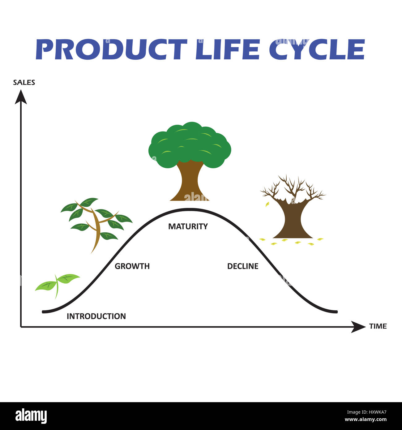 Tree Life Cycle Diagram Stock Photos Tree Life Cycle