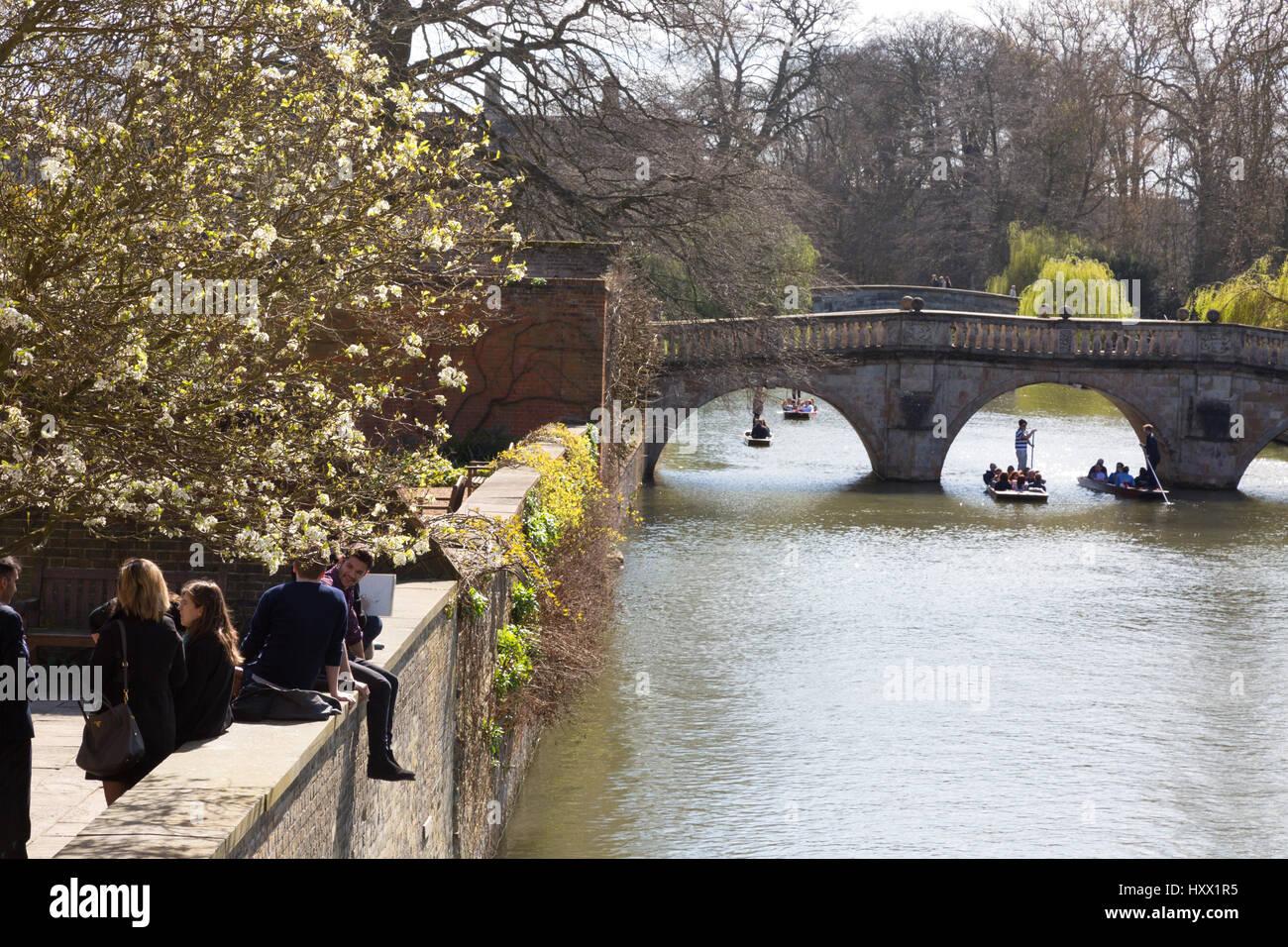 Cambridge UK - Cambridge punting on the River Cam in spring at Clare Bridge, Cambridge England - Stock Image