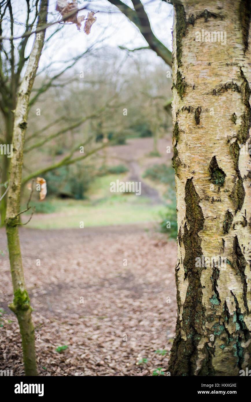 tree bark and branch hampstead london - Stock Image