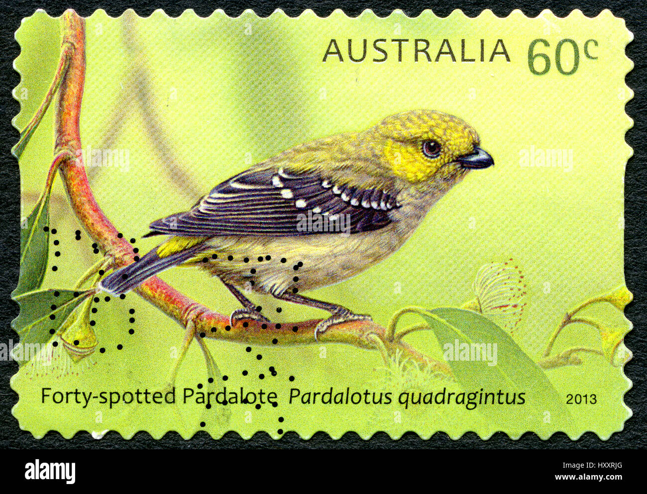 AUSTRALIA - CIRCA 2013: A used postage stamp from Australia, depicting an illustration of a Forty-Spotted Pardalote - Stock Image