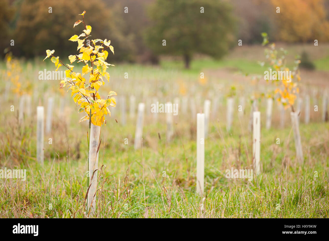 Planting Trees Uk Stock Photos & Planting Trees Uk Stock