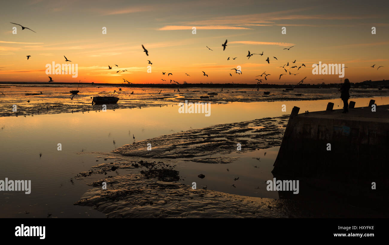 Fishing harbour harbor sunset seagulls flying low tide Stock Photo