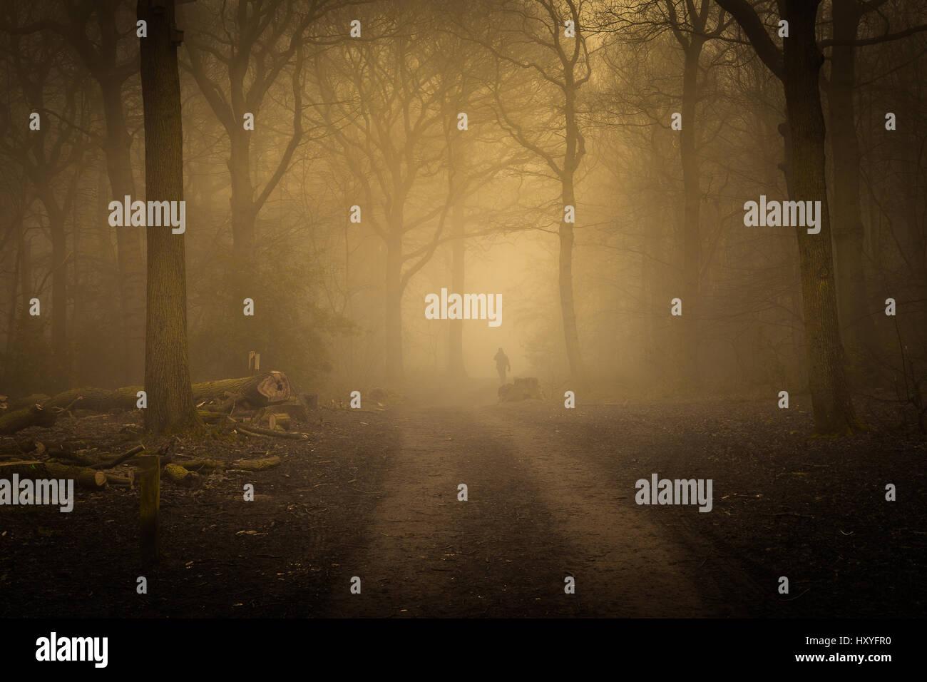 Foggy woods early morning light, dog walker Stock Photo