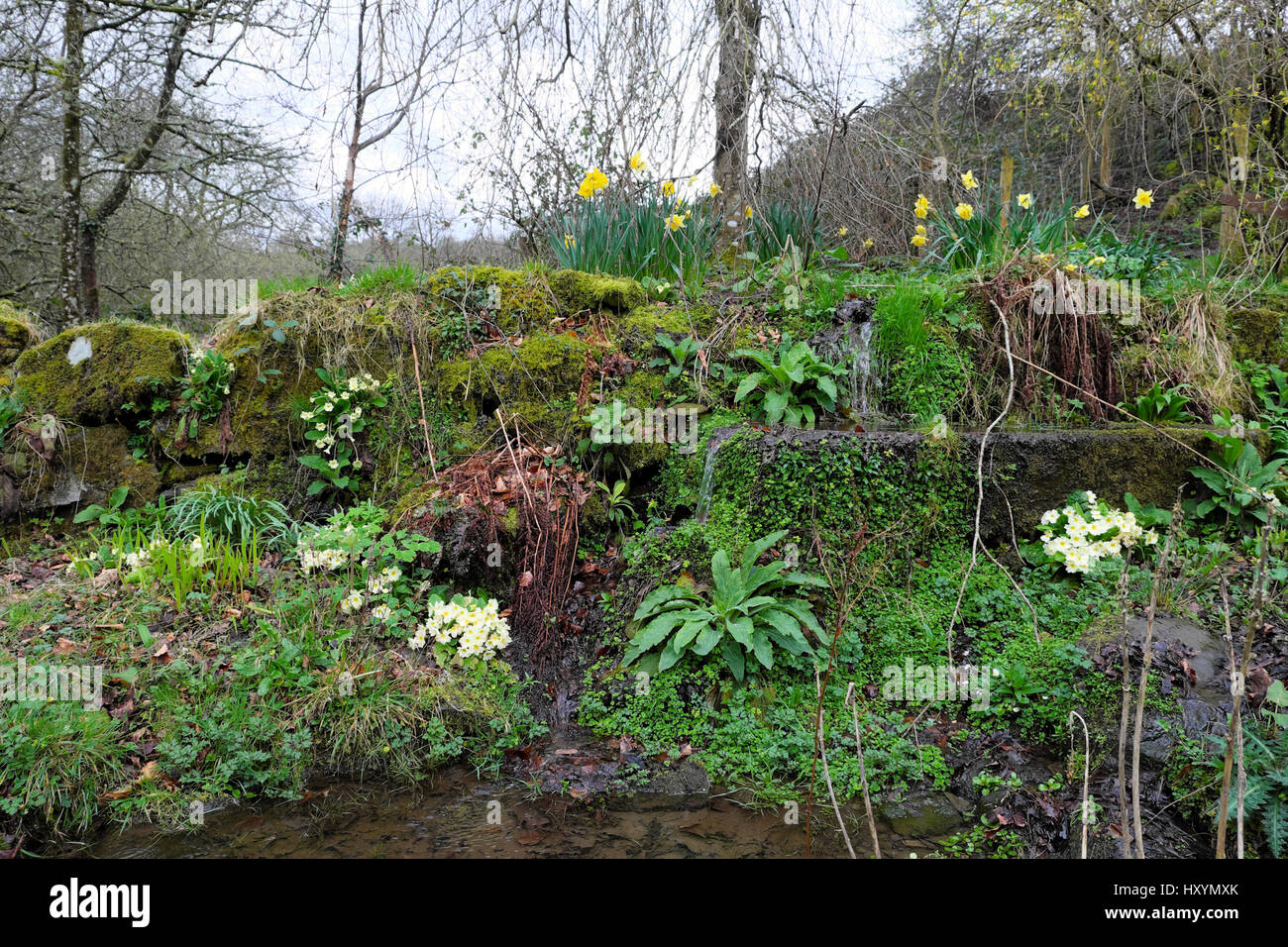 Rock garden in spring with water trough, ferns, polyanthus, daffodils in  Carmarthenshire Wales UK  KATHY DEWITT - Stock Image