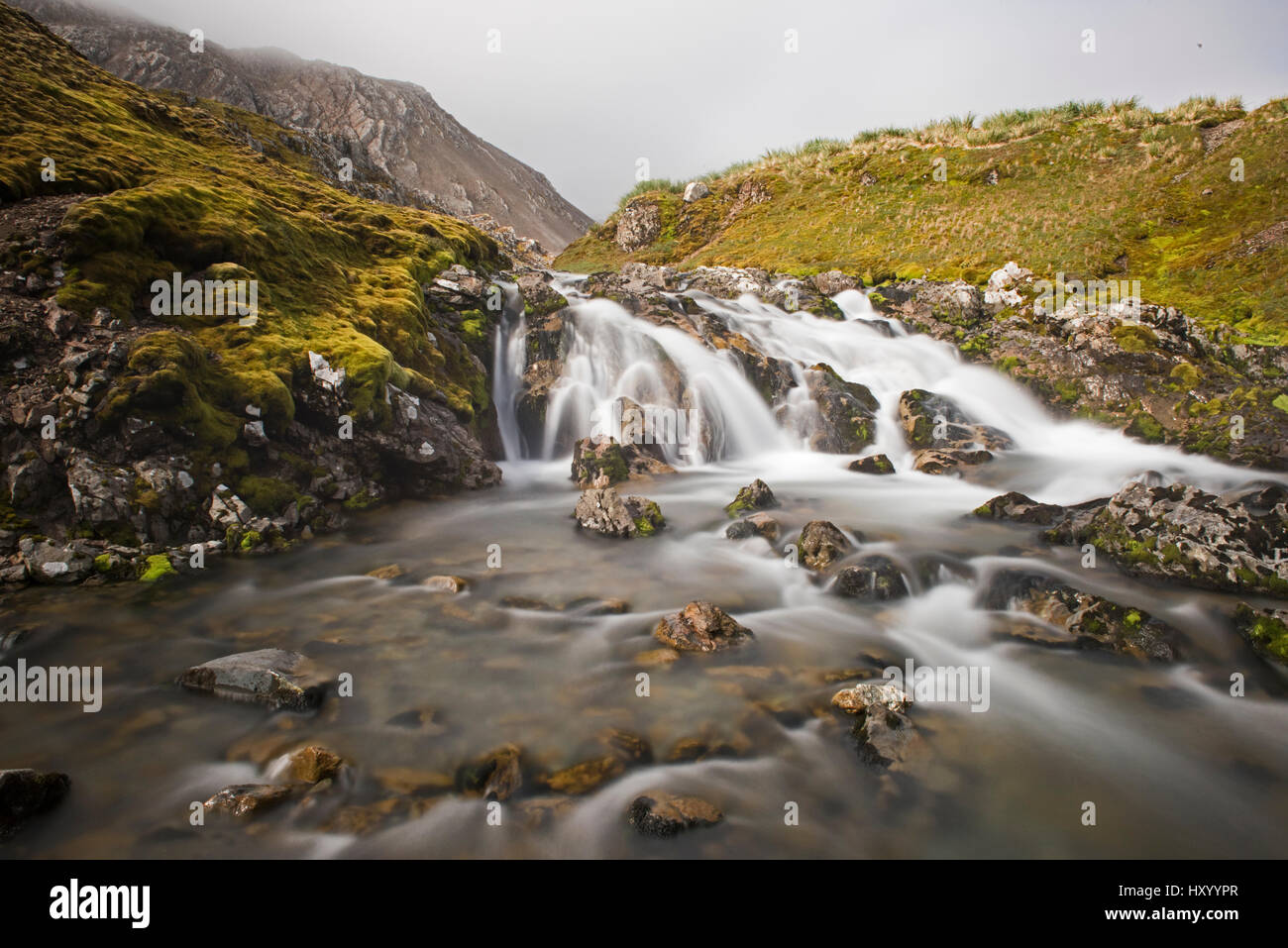 Stream in valley near Coal Harbour, South Georgia. January 2015. - Stock Image