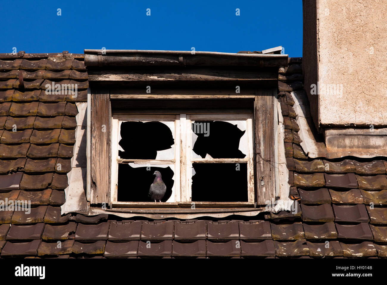 Germany,  Cologne, pigeon in a window of an old abandoned harbor building in the harbor Deutz. - Stock Image