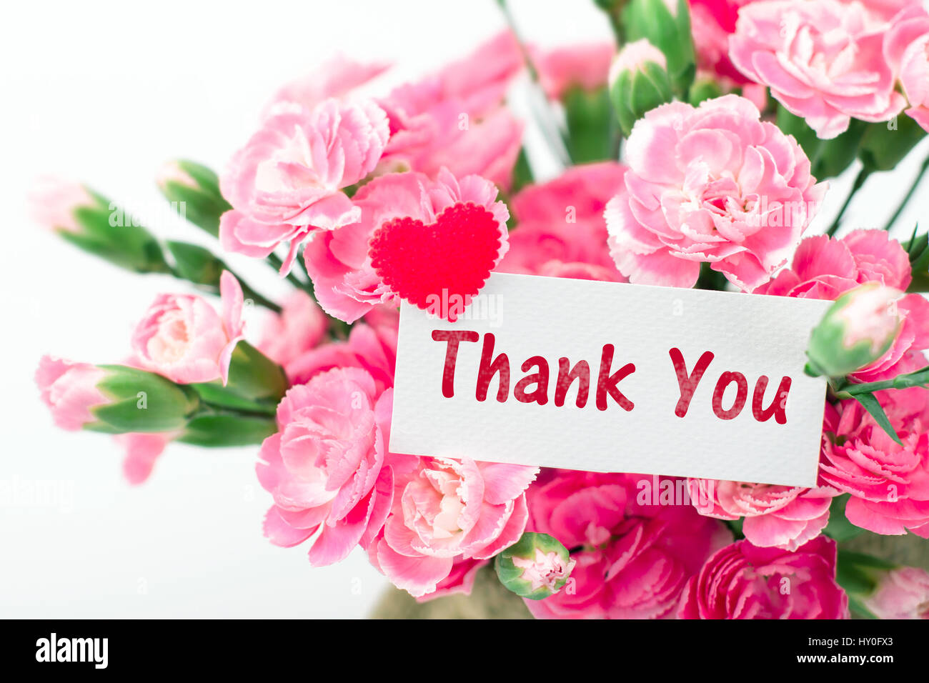 Thank You Card And Beautiful Blooming Of The Pink Carnation Flowers