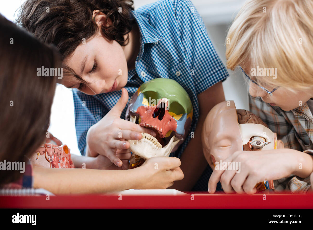 Lively students examining human bone structure - Stock Image