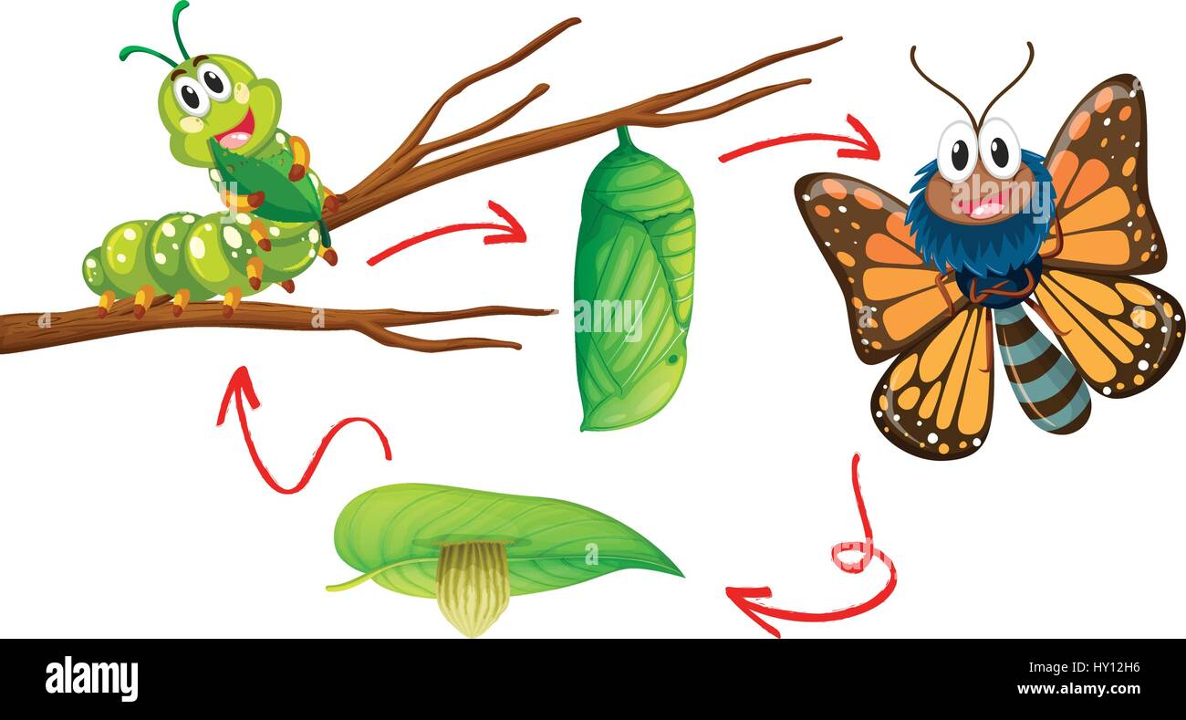 Butterfly life cycle diagram illustration stock vector art butterfly life cycle diagram illustration ccuart Choice Image