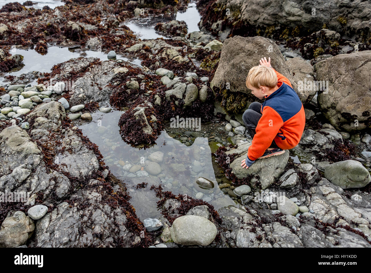 A little boy / child looks into a tide pool at MacKerricher State Park in Mendocino County on the northern California - Stock Image