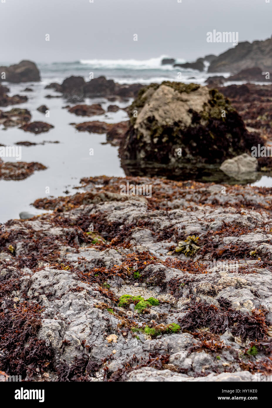 Tide pools at MacKerricher State Park near Fort Bragg in Northern California along Highway 1 on overcast day, great - Stock Image