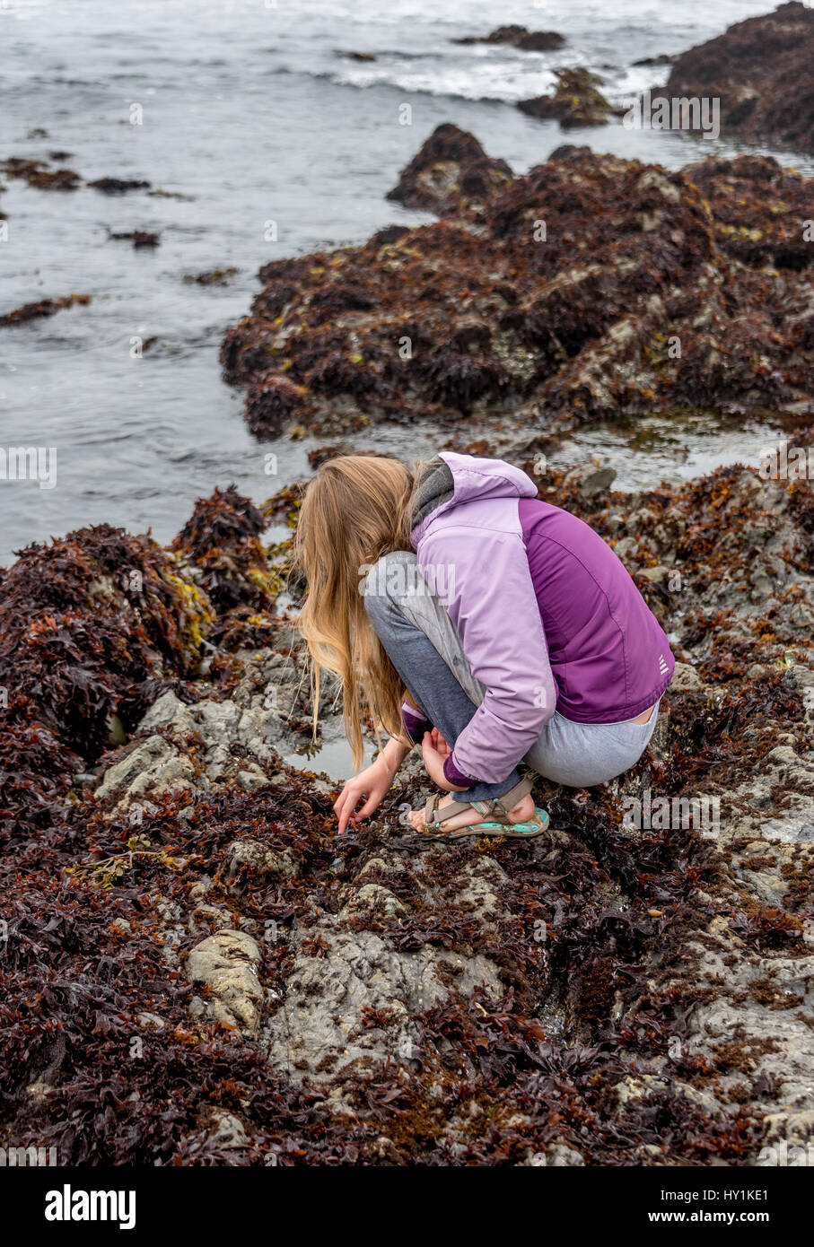 A girl with long blond hair crouches down or squats down, touching tide pool while tidepooling at MacKerricher State - Stock Image