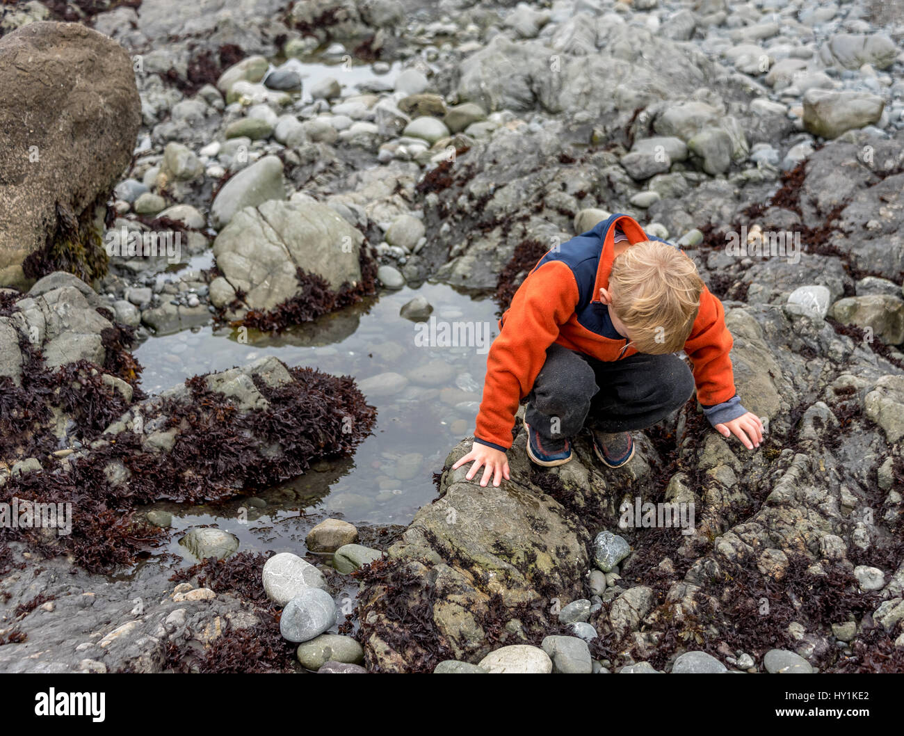 A boy child looks into a tide pool at MacKerricher State Park in Mendocino County on the northern California Coast, - Stock Image