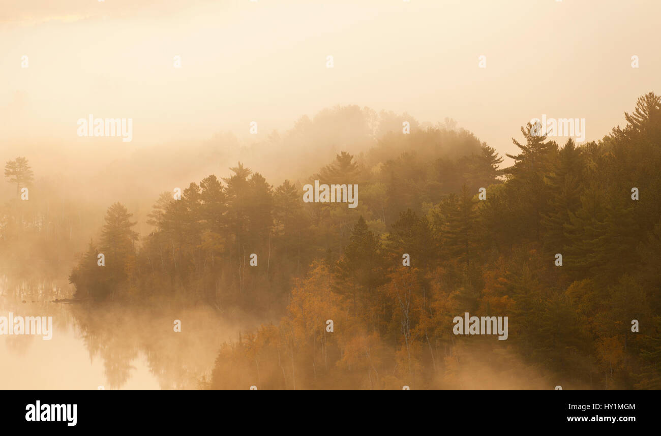 Pines and aspens in morning fog on Boundary Waters Canoe Area Wilderness lake - Stock Image