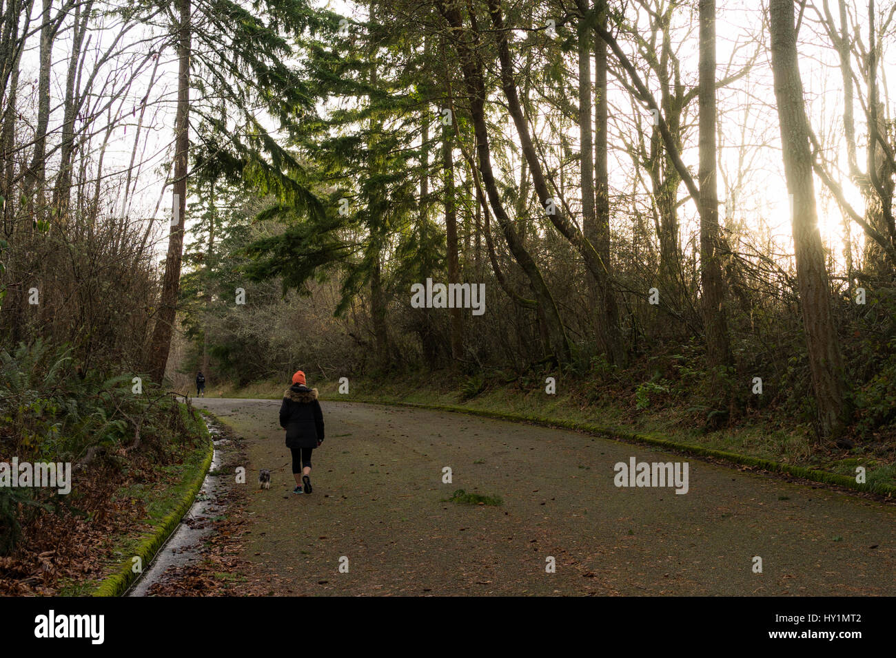 A girl walks a small dog in Discovery Park while the sun peeks through the trees on an abandoned road. - Stock Image