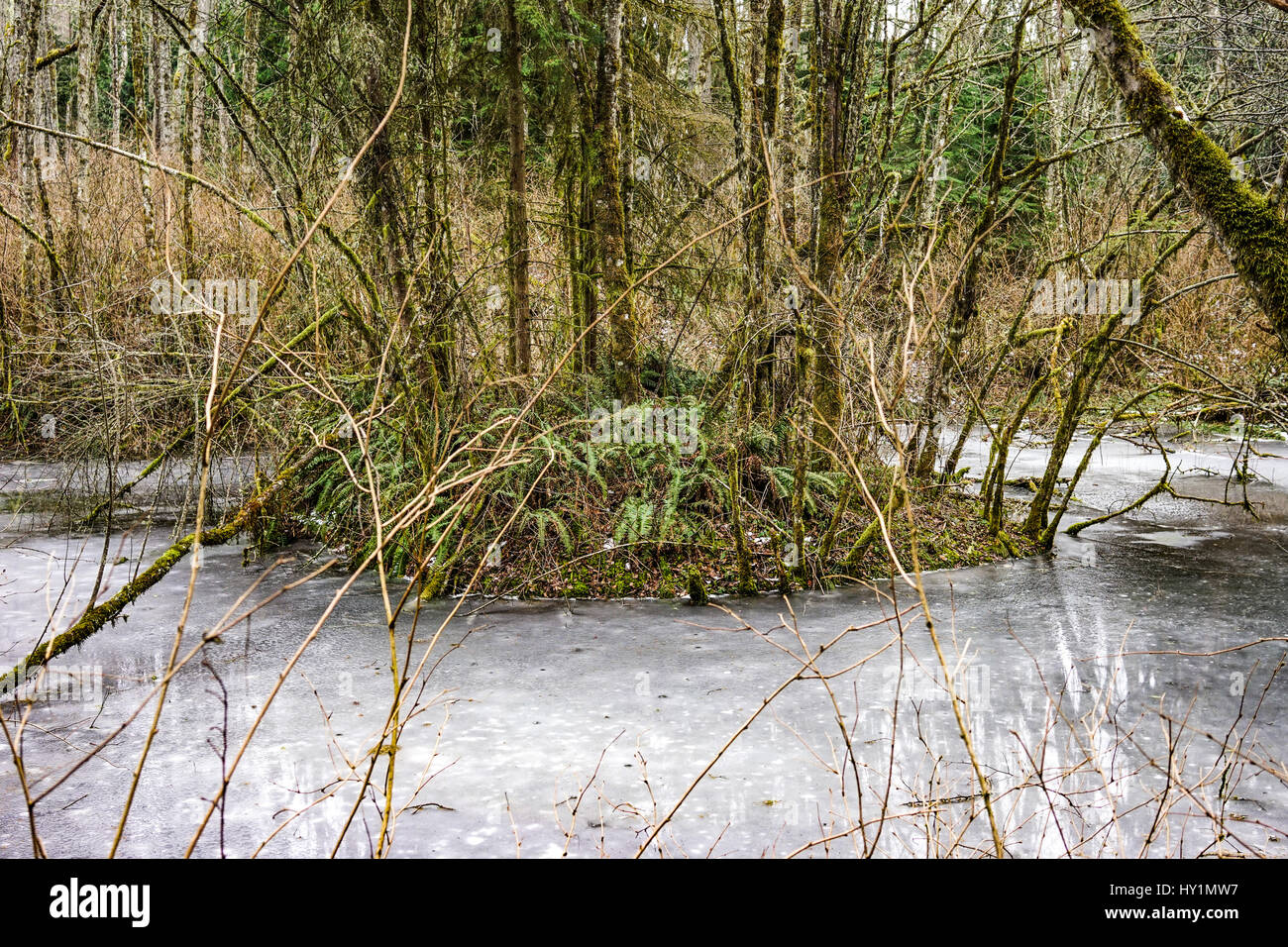 Icy pond in Issaquah on a Cougar Mountain hike in the winter. - Stock Image
