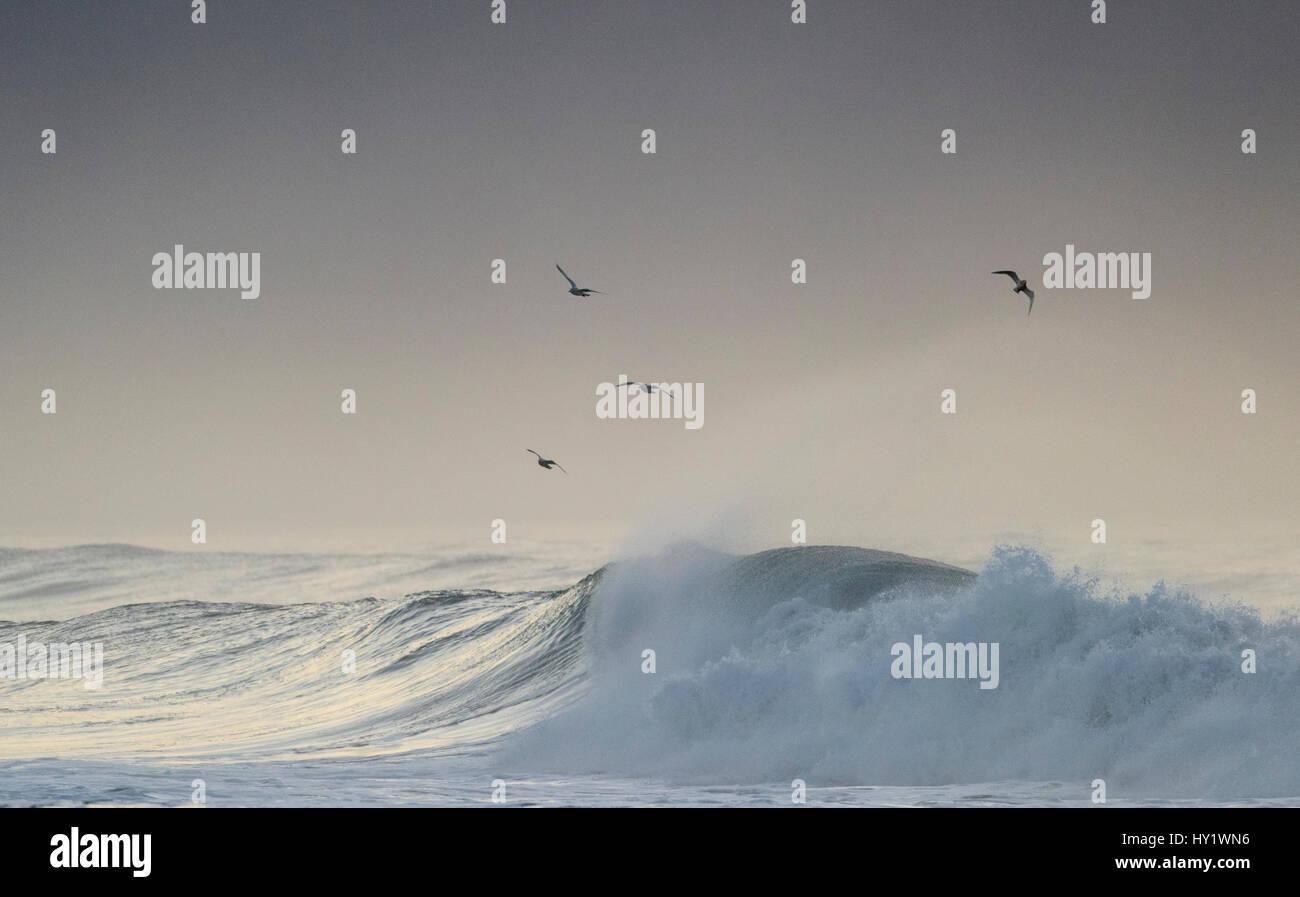 RF-Large waves off the coast of south Iceland, Iceland - Stock Image