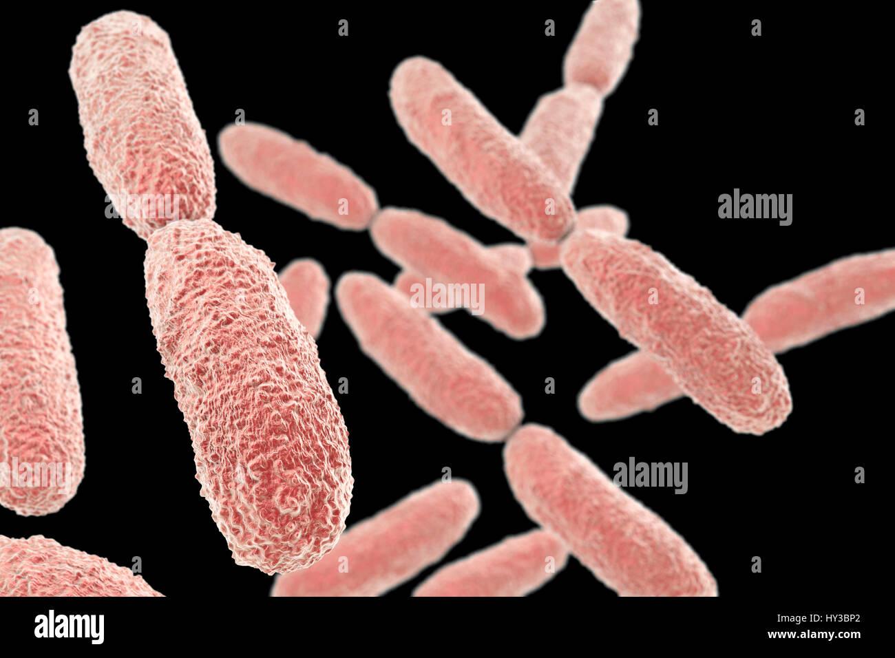 Klebsiella pneumoniae bacteria,computer illustration.K.pneumoniae are Gram-negative,encapsulated,non-motile,enteric,rod - Stock Image