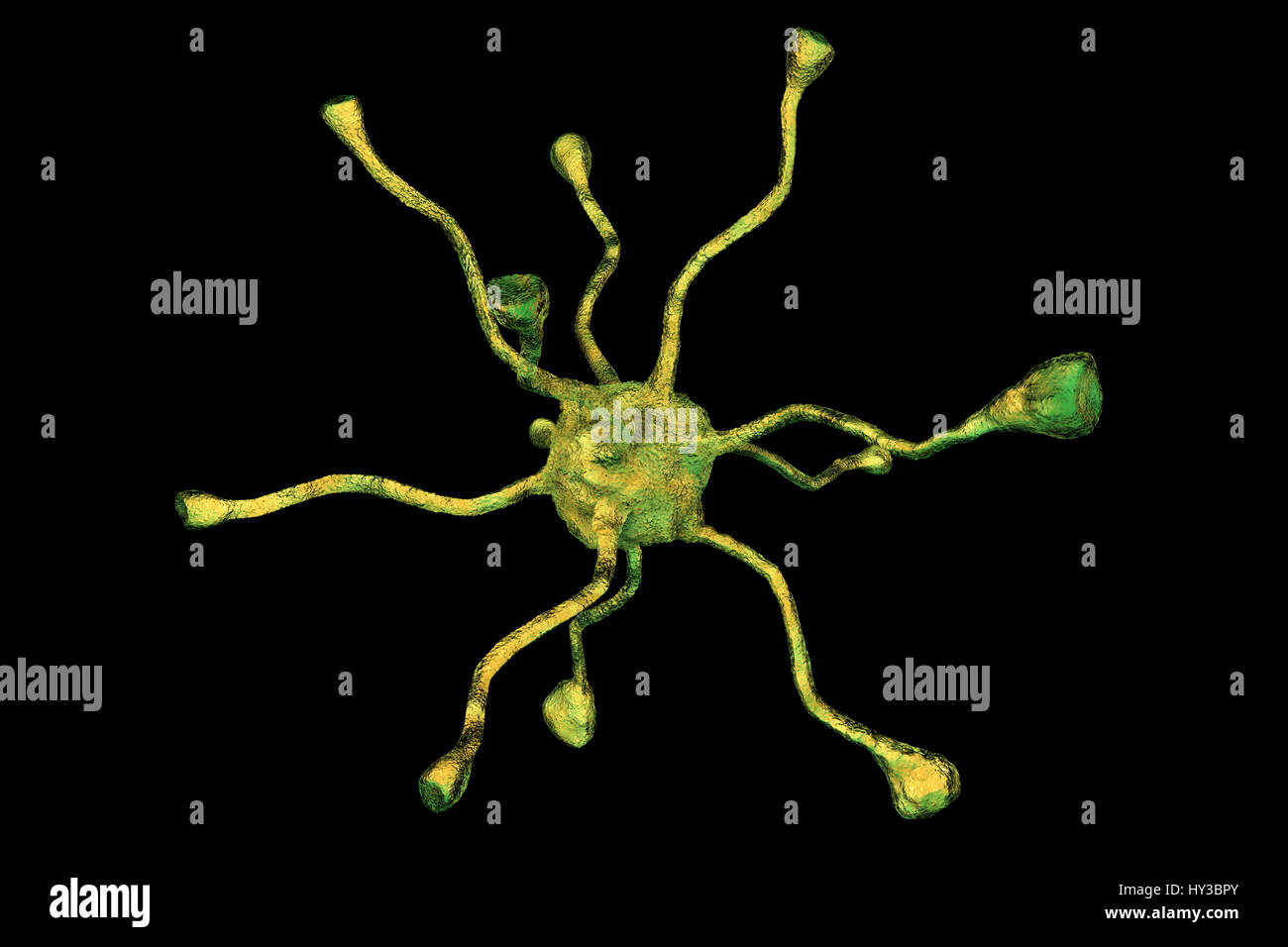Nerve cell, or neuron, from the human brain, computer illustration. - Stock Image