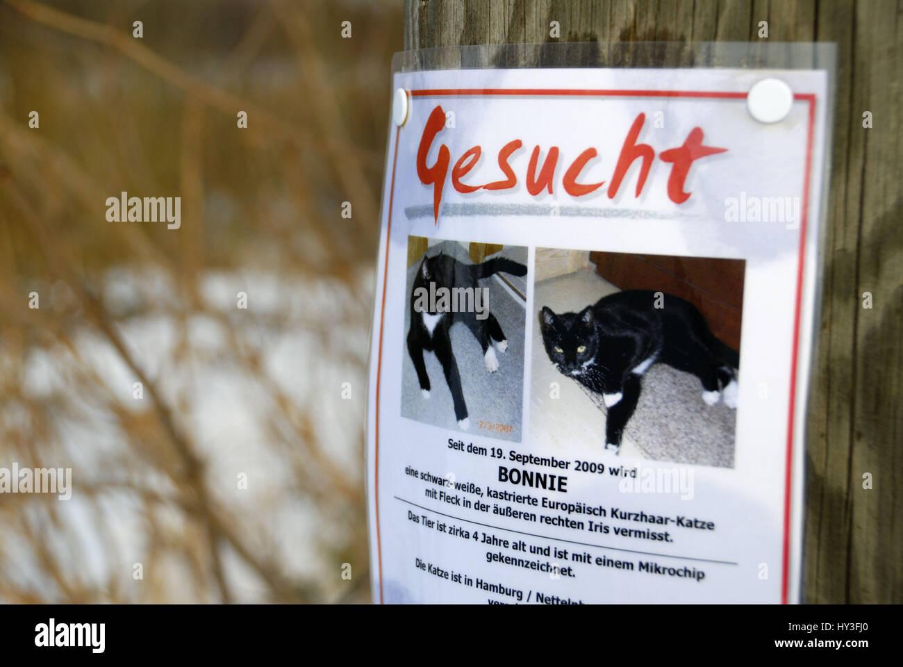 Run away cat is searched with a leaflet, Entlaufene Katze wird mit einem Handzettel gesucht - Stock Image