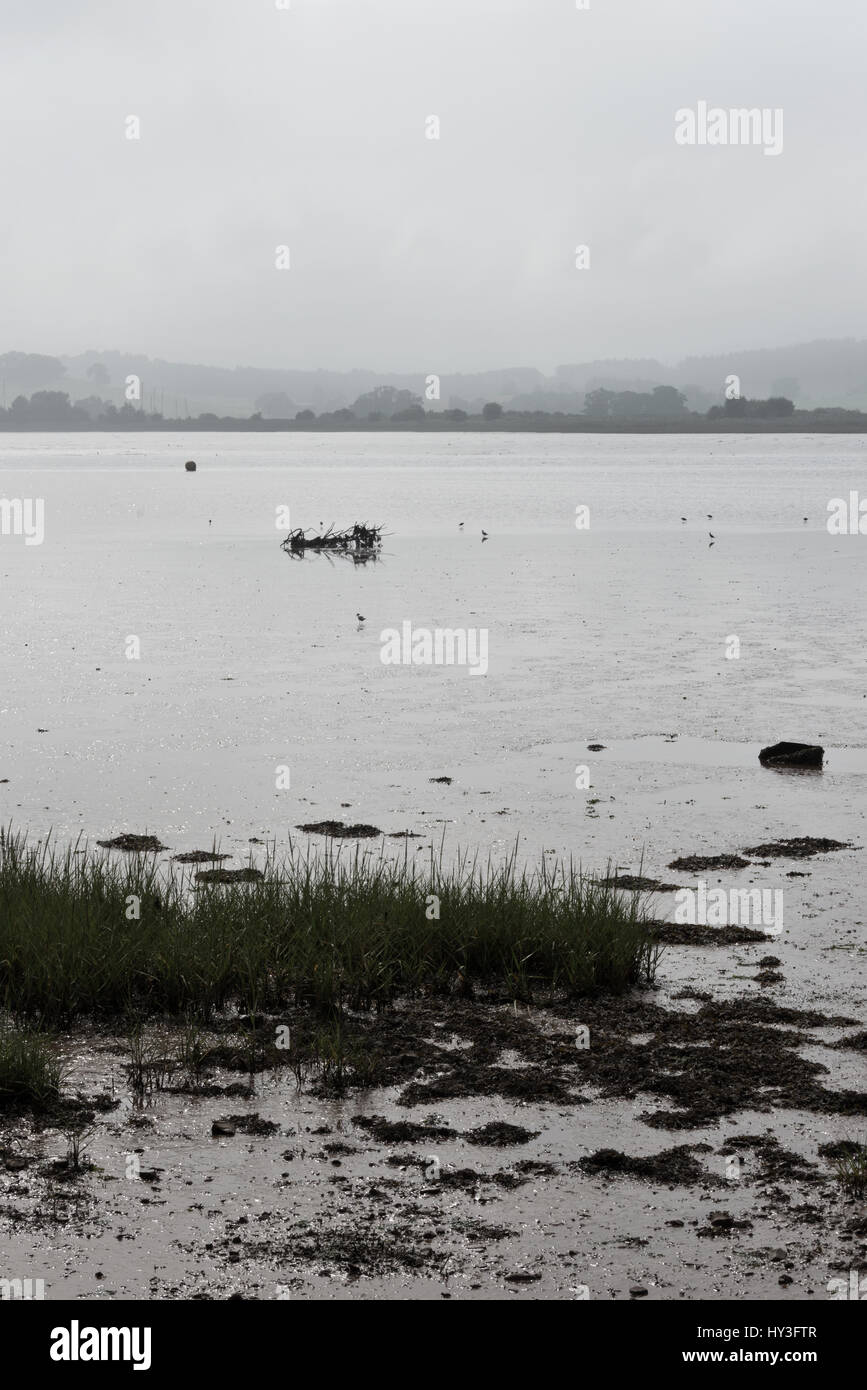 a view across the Exe estuary from Goat Walk looking toward Turf Lock and the hills beyond that are shrouded in - Stock Image