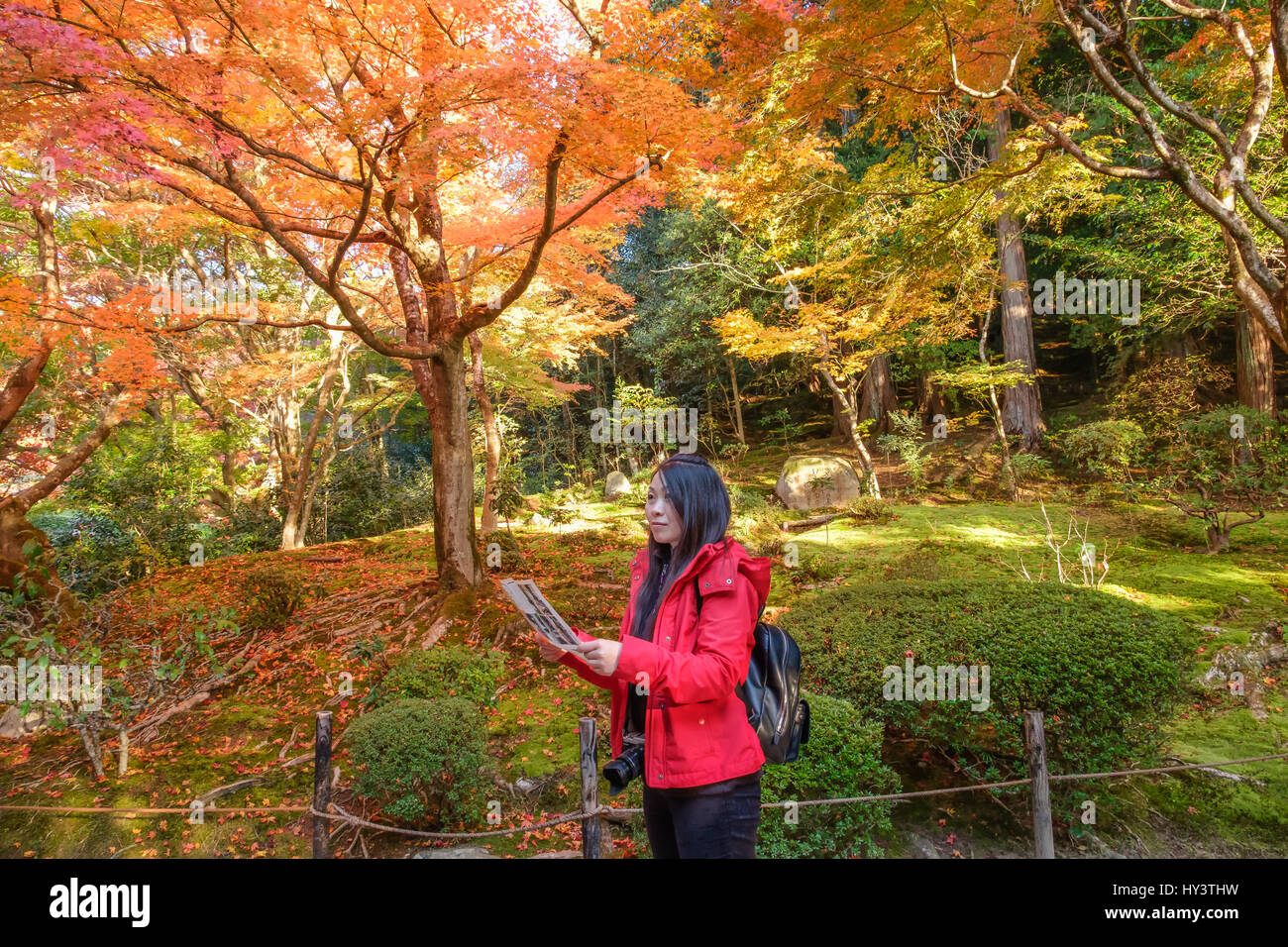 Woman tourist in red jacket and with camera and map stands and looks in garden with autumn colour trees in Shisen - Stock Image