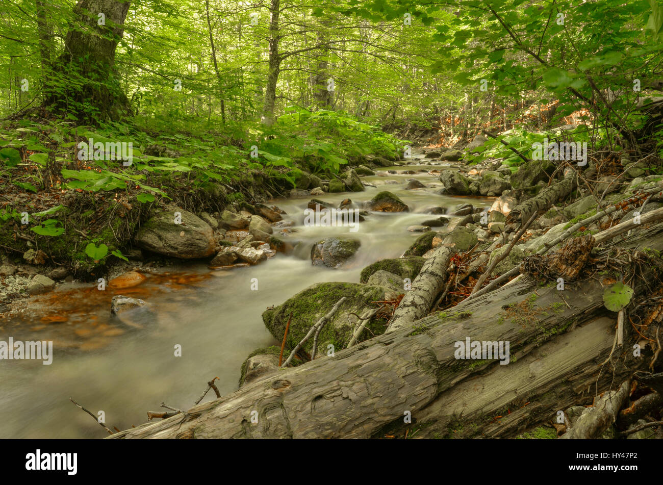 Wild River - Nature – Relaxing Background, Mariovo region, Macedonia - Stock Image