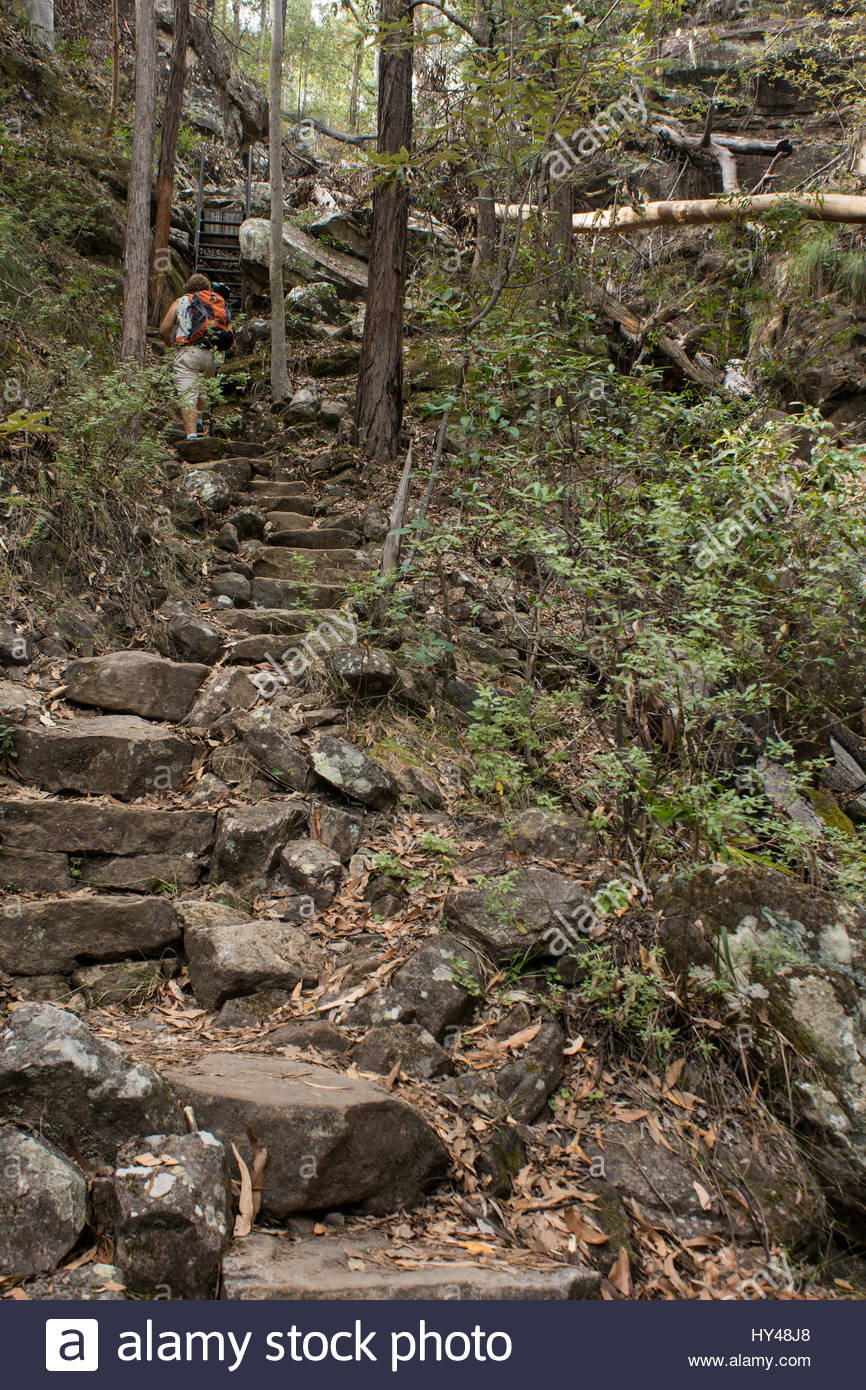 A bushwalker climbs a step section of the strenuous walking track to Bulimba Bluff in Carnarvon Gorge National Park - Stock Image
