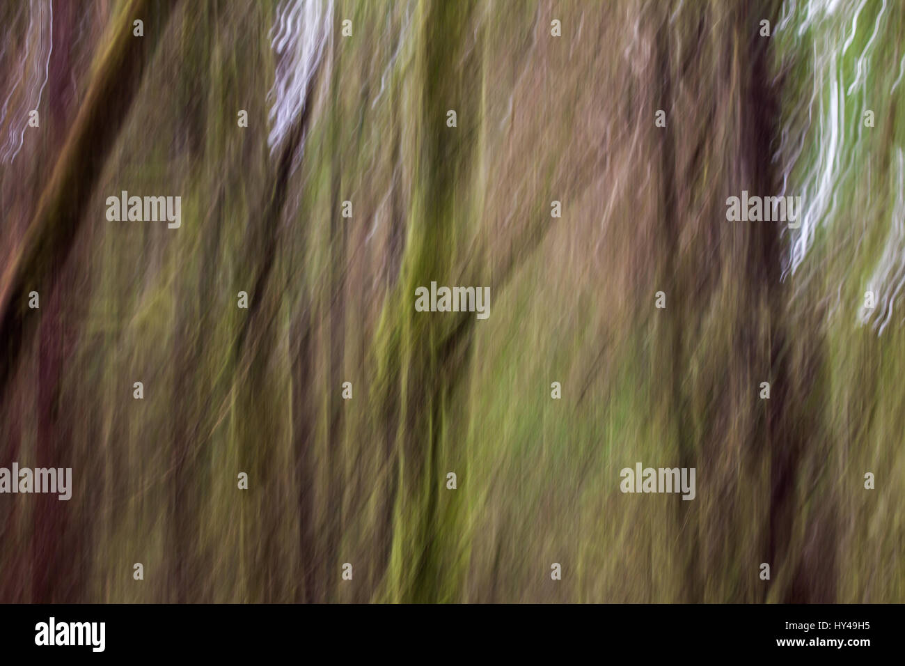 Abstract, impressionist-like image of West Coast rainforest.  Moss covered branches and tree trunks is blurred to - Stock Image