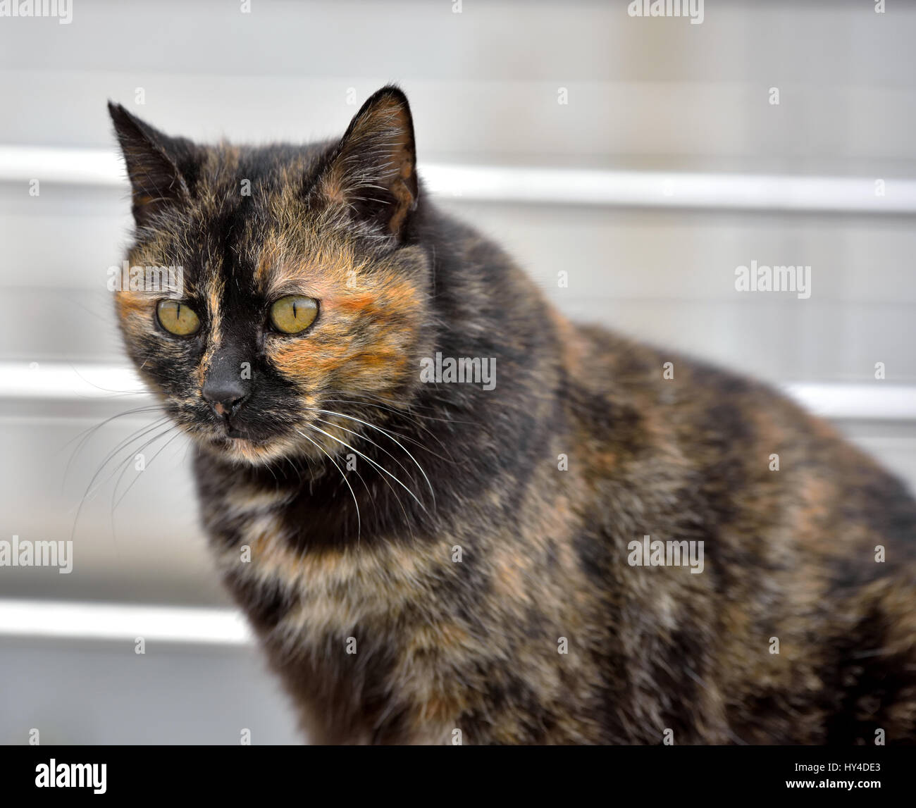chubby cat - Stock Image