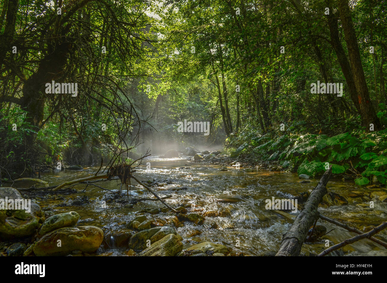 Wild Nature – Relaxing Background - Stock Image