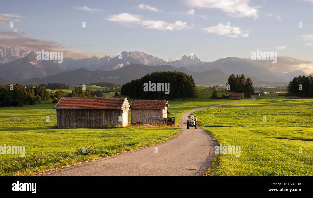 A tractor and huts in the Alpine foreland of Allgäu shining in the summerly sunset, - Stock Image
