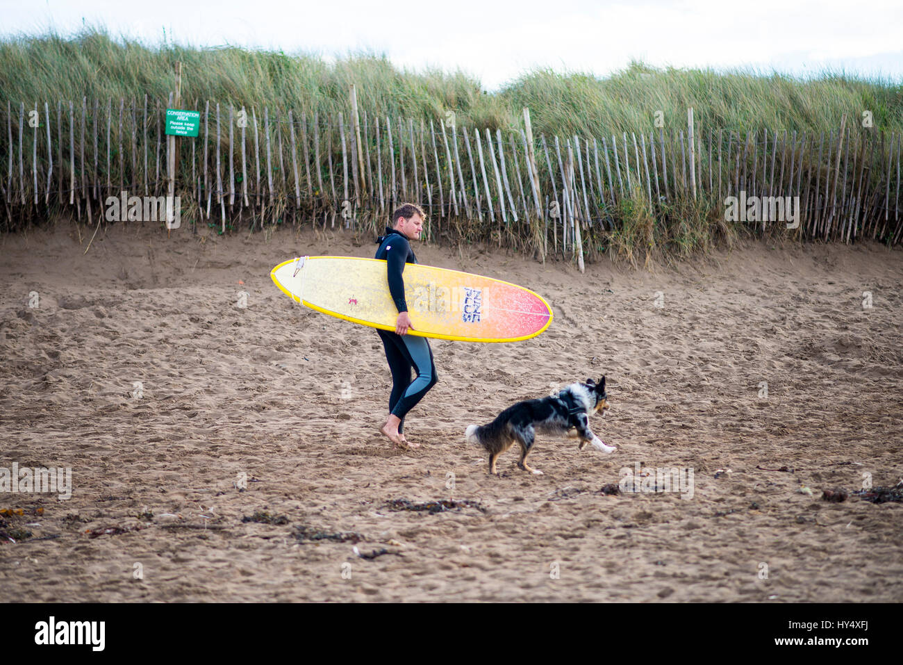 Male surfer with his dog at Bantham beach in Devon, England - Stock Image