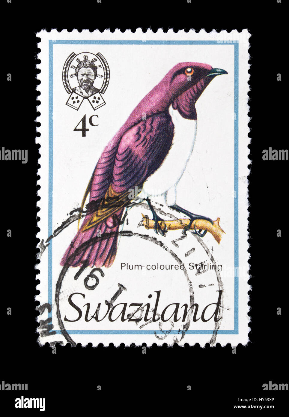 Postage stamp from Swaziland depicting a Plum-coloured Starling (Cinnyricinclus leucogaster) Stock Photo