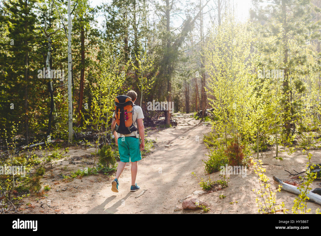 USA, Colorado, Rocky Mountain National Park, Young man hiking in forest - Stock Image