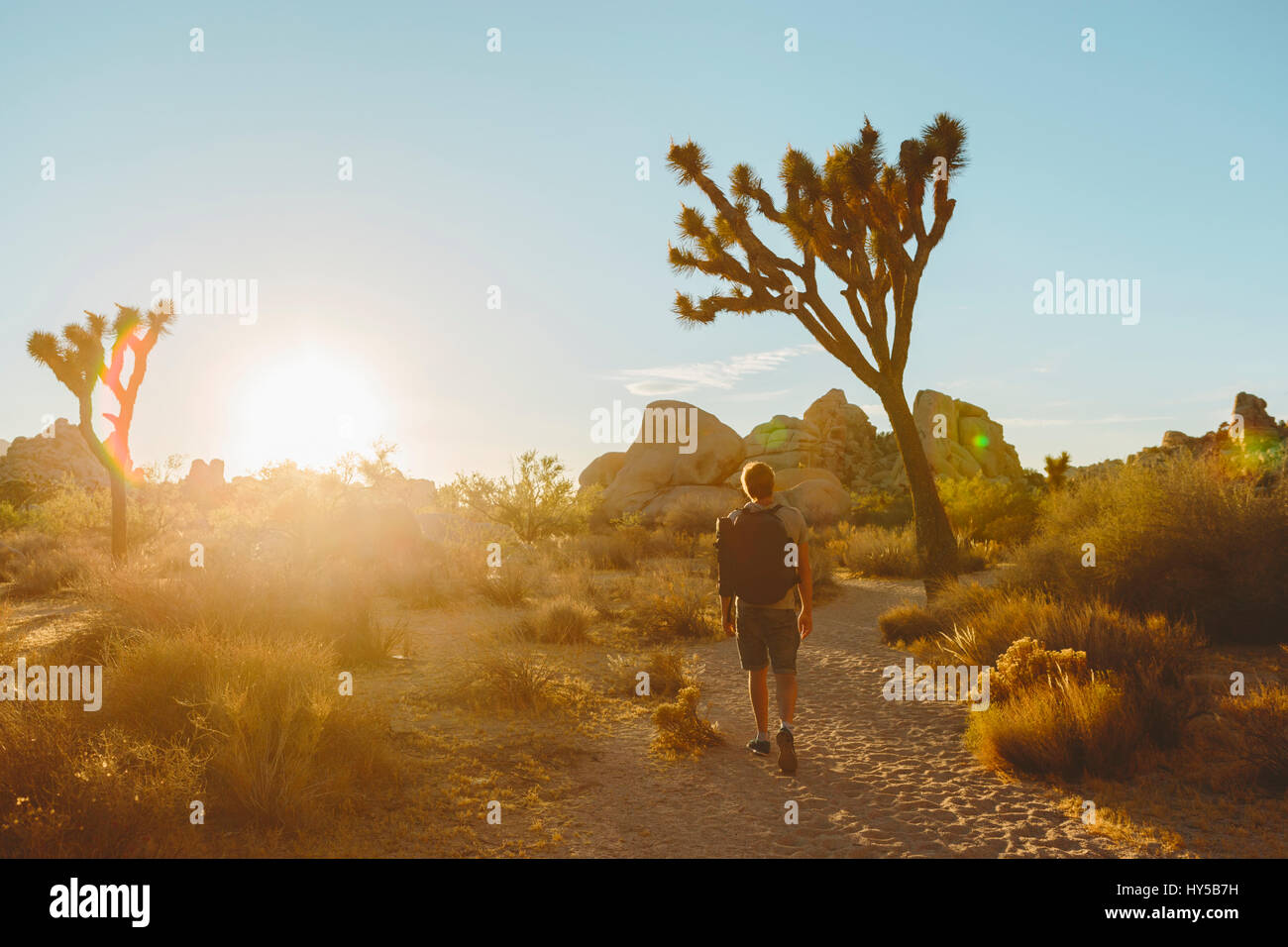 USA, California, Joshua Tree National Park, Man hiking at sunset - Stock Image