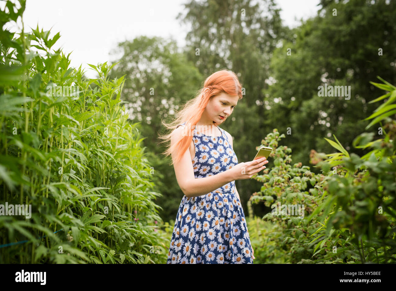 Finland, Pirkanmaa, Tampere, Woman photographing nature - Stock Image