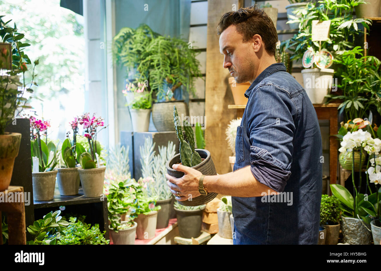 Sweden, Florist working in flower shop - Stock Image
