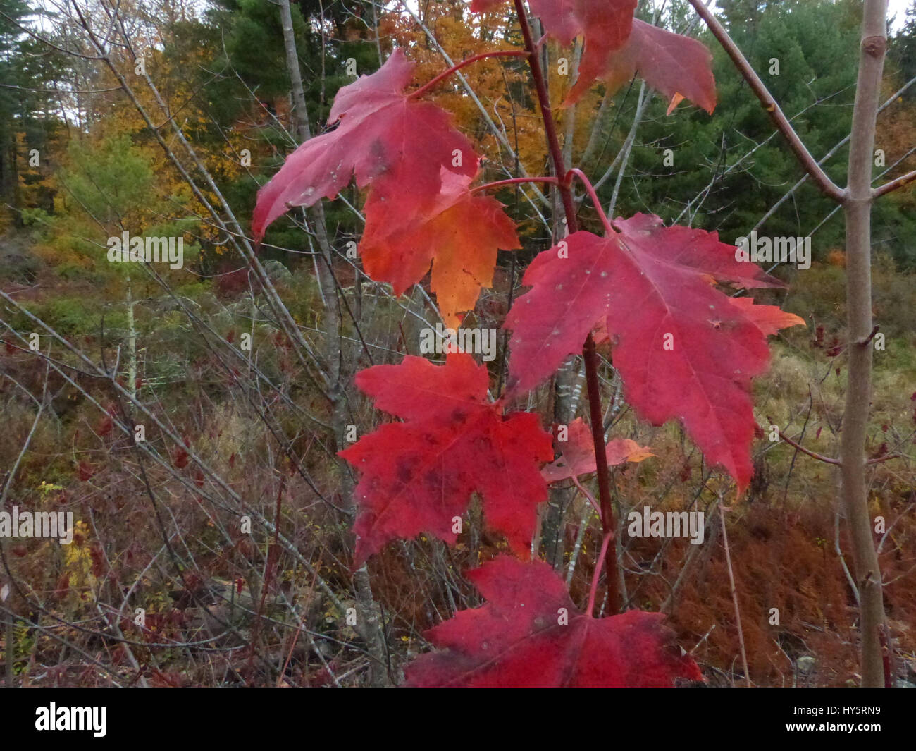 Autumn Changing Colors Fall Foliage Indian Indian Summer Summer ...