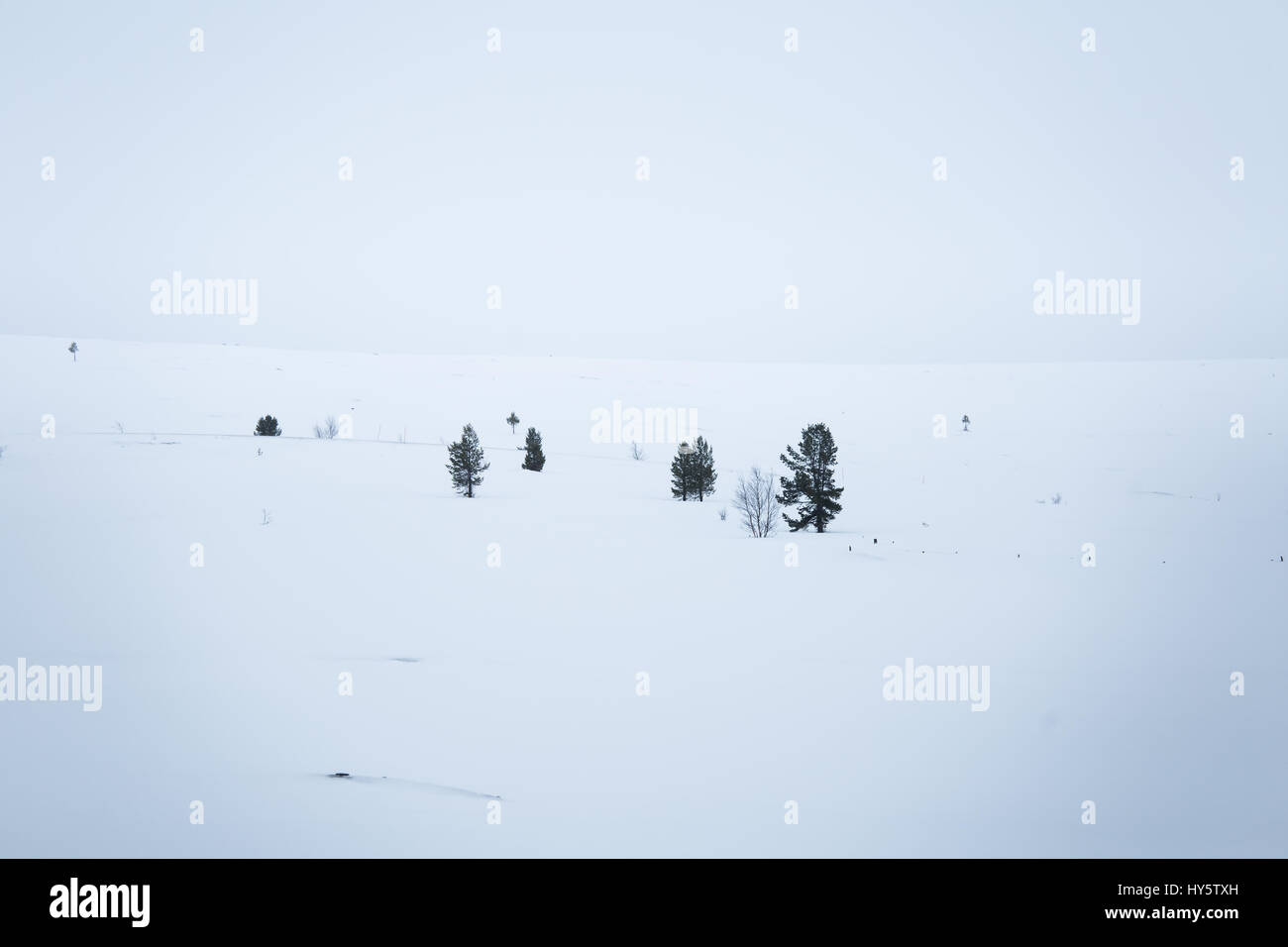 A beautiful, minimalist landscape of snowdrift in Norway. Clean, light, high key, decorative look. Stock Photo