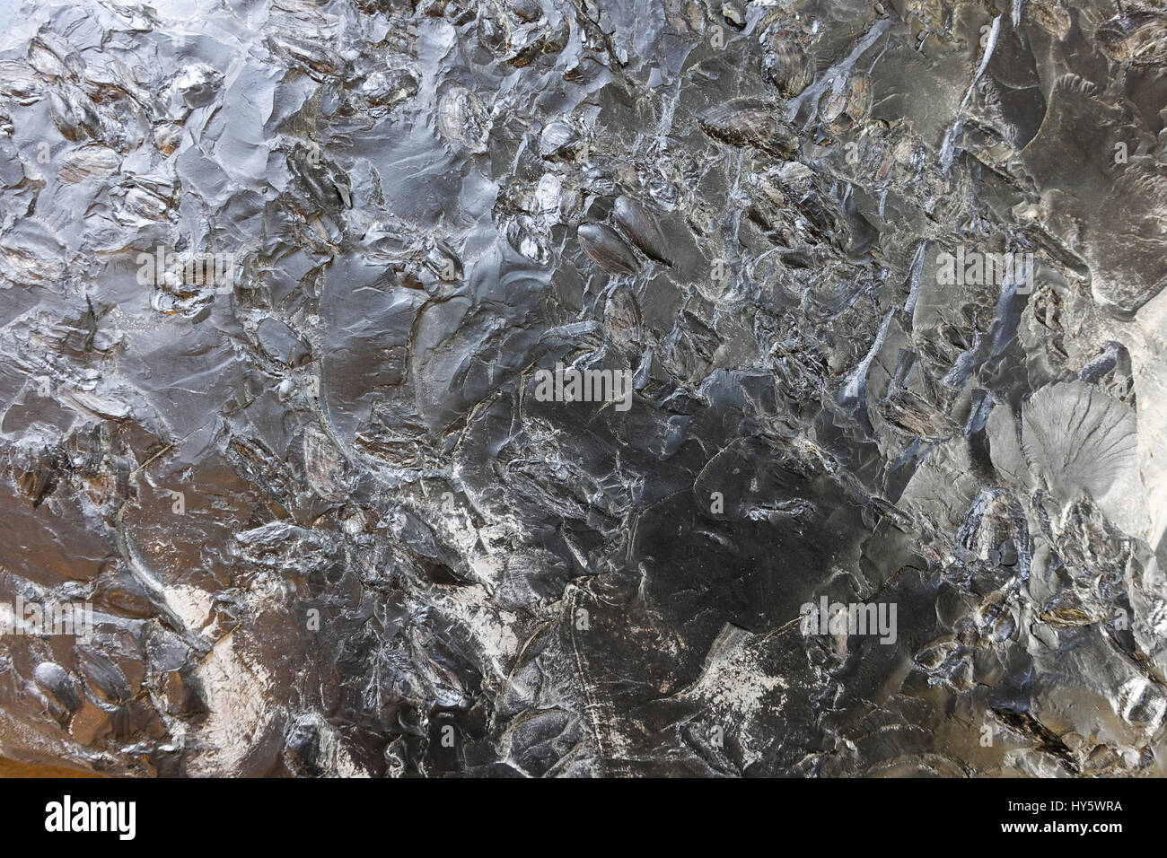 Surface of coal rock, geology, Carboniferous Period. Netherlands. Stock Photo