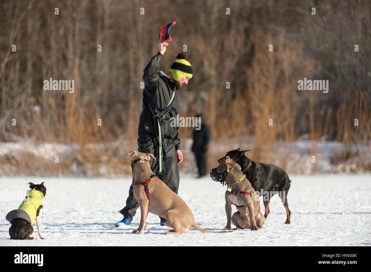 K Dog Walking Ilkley